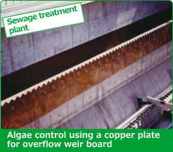 Algae control using a copper plate for overflow weir board
