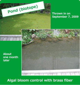 Algal bloom control with brass fiber